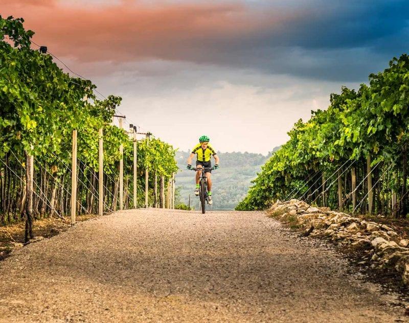 cykla mellan vingårdarna i Champagne